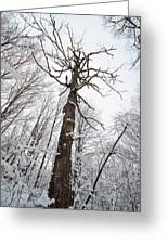 Winter Tree Perspective Greeting Card