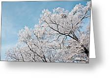 Winter Tree Scene Greeting Card
