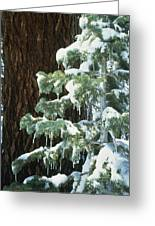 Winter Tree Sierra Nevada Mts Ca Usa Greeting Card