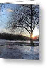 Winter Tree Sunset Greeting Card