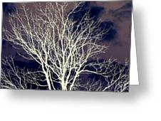 Winter Trees  2   Greeting Card