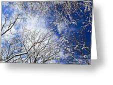 Winter Trees And Blue Sky Greeting Card