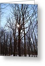 Winter Trees And Sun Greeting Card