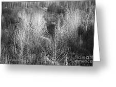 Winter Trees  B And W 1 Greeting Card