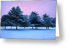 Winter Trees Greeting Card by Brian Jannsen