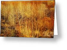 Winter Trees Color 4 Greeting Card