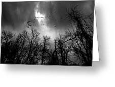 Winter Trees Moving Sky Greeting Card