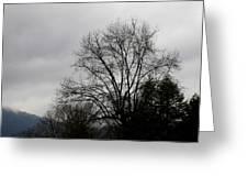 Winter Trees Number Four Greeting Card
