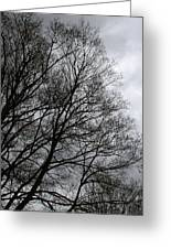 Winter Trees Number Three Greeting Card