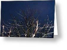 Winter Treetop Greeting Card