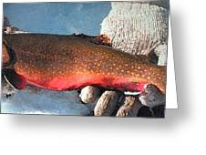 Winter Trout Greeting Card