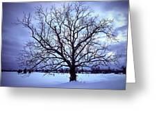 Winter Twilight Tree Greeting Card