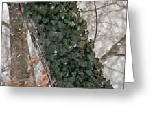 Winter Vine Greeting Card
