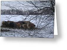 Winter Warriors Greeting Card