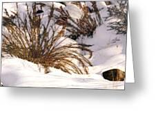 Winter Weeds Greeting Card