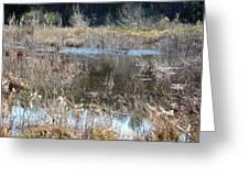 Winter Wetlands Of Alabama Greeting Card