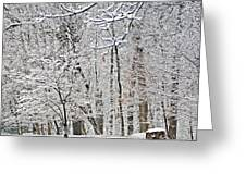 Winter White Trees Greeting Card