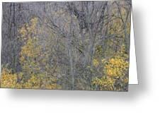 Winter Willows II Greeting Card