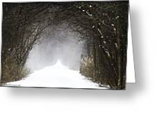 Winter Wonder Snow Tunnel Of Trees Greeting Card