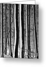 Winter Woodlands 2 Greeting Card