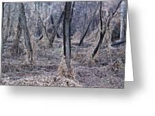 Winter Woods In Missouri 1 Greeting Card