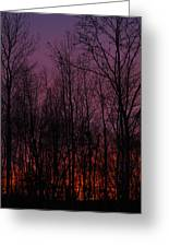 Winter Woods Sunset Greeting Card