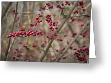 Winterberries Squared Greeting Card