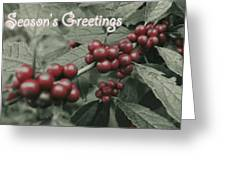 Winterberry Greetings Greeting Card