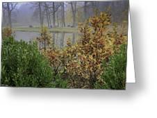 Winterberry In Fog Greeting Card