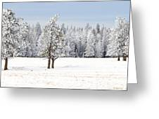 Winter's Coat Greeting Card by Dee Cresswell