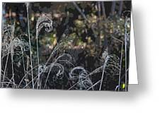 Winters Flourishes  Greeting Card