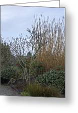 Winters Garden In Seattle  Greeting Card