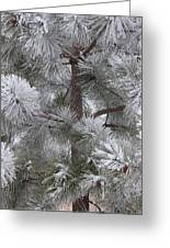 Winter's Gift Greeting Card