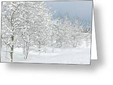 Winter's Glory - Grand Tetons Greeting Card by Sandra Bronstein