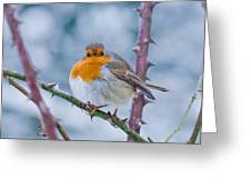 Winters Here Greeting Card