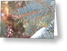 Winters Look Greeting Card