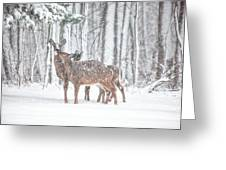 Winters Love Greeting Card
