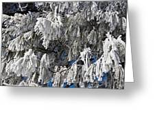 Winter's Paintbrushes Greeting Card