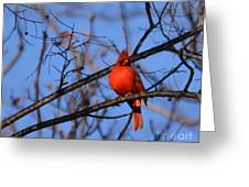 Winter's Red Beauty 5 Greeting Card