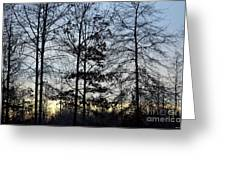 Winter's Trees At Dusk Greeting Card