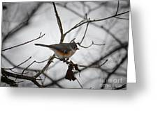 Winter's Tufted Titmouse Greeting Card