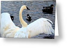 Winter's White Swan Greeting Card