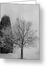 Wintery Tree Greeting Card