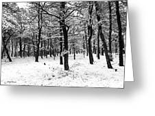 Wintry Woods Greeting Card