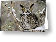 Wise Old Great Horned Owl Greeting Card