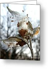 Wisps In The Wind Greeting Card