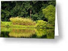 Wispy Wild Grass Reflections Greeting Card