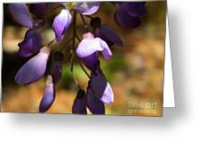 Wisteria 2 Greeting Card