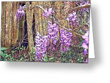 Wisteria And Old Fence Greeting Card