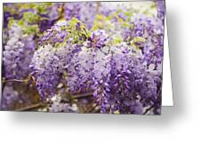 Wisteria Garden 2 Greeting Card
